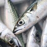 毎日の献立(魚選び)の参考に!DHA・EPAが多い魚ランキング